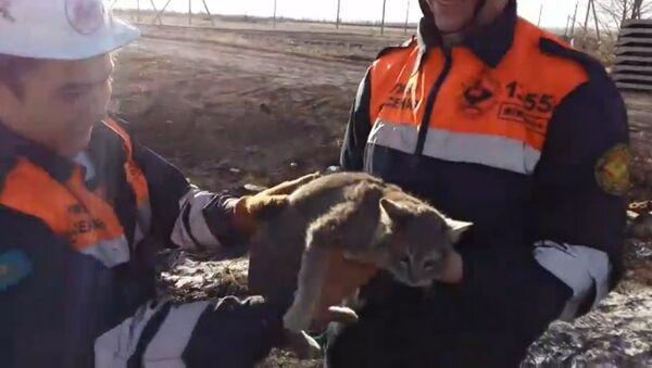 Спасатели в Караганде спасли кошку, застрявшую в бетонной плите - Sputnik Латвия