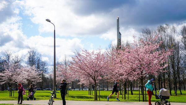 Памятник Освободителям и цветущая сакура в Парке Победы в Риге - Sputnik Латвия