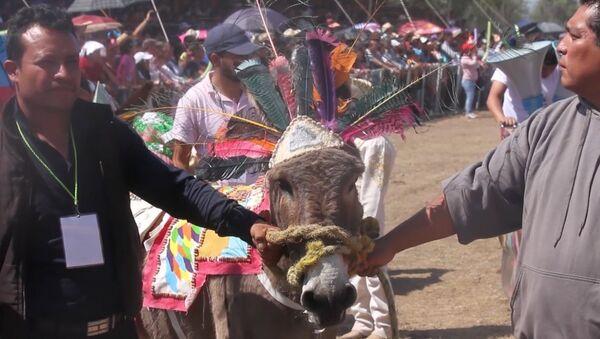 Serenādes ēzeļiem un tērpu konkurss: neparastais festivāls Meksikā - Sputnik Latvija
