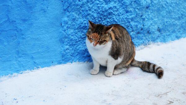 Бездомная кошка - Sputnik Латвия