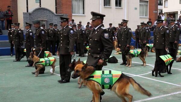 Почетные проводы полицейских собак в Эквадоре - Sputnik Латвия
