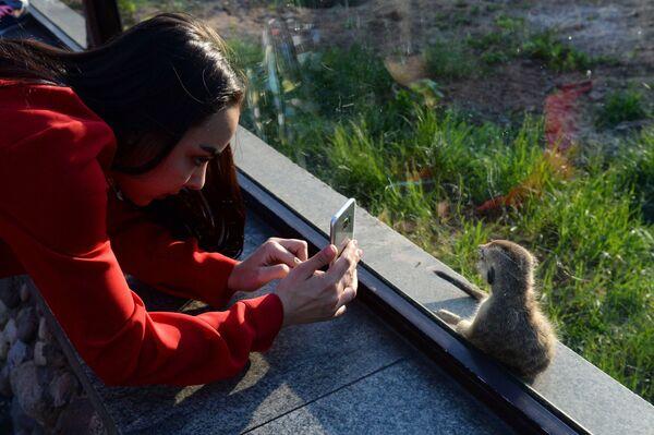 Девушка фотографирует суриката в Московском зоопарке - Sputnik Латвия