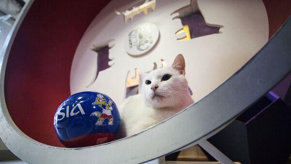Эрмитажный кот Ахилл-оракул чемпионата мира по футболу 2018 - Sputnik Латвия