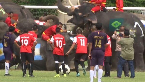 Футбольный матч между школьниками и слонами - Sputnik Латвия