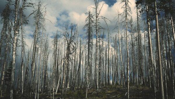 Лес после пожара - Sputnik Латвия