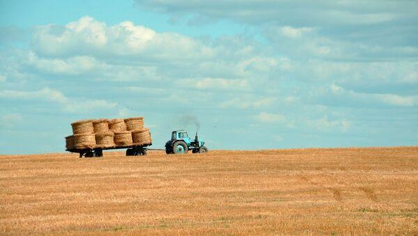 Трактор на поле собирает пшеницу - Sputnik Латвия