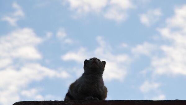 Кошка на крыше. Архивное фото - Sputnik Латвия