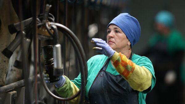 Работница на молочно-товарной ферме - Sputnik Латвия