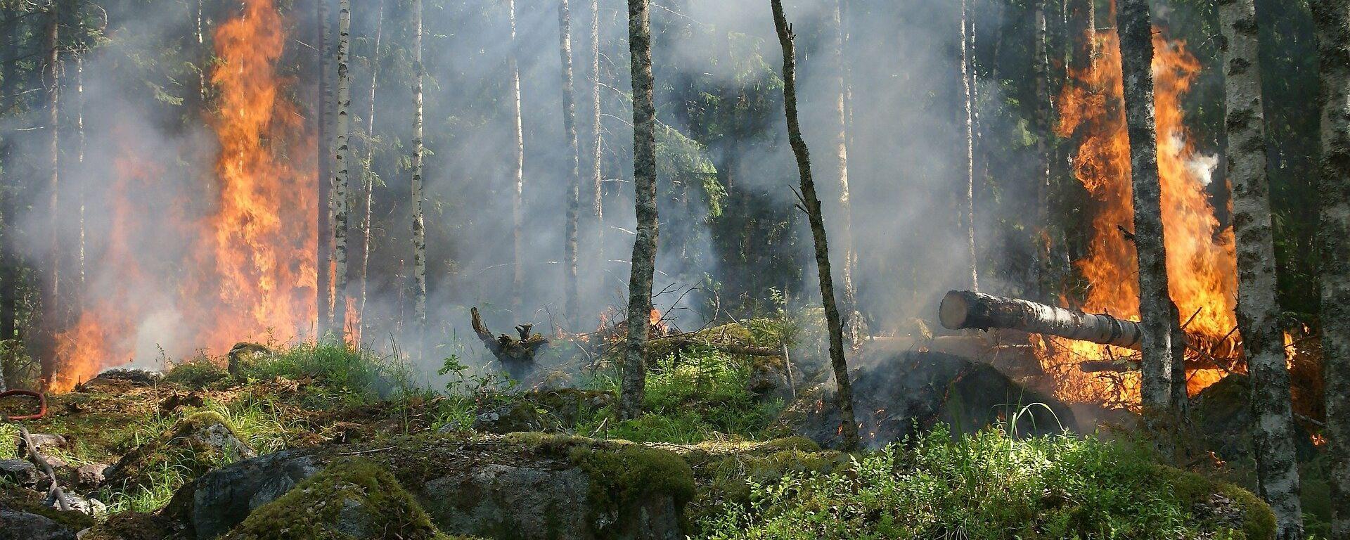 Лесной пожар - Sputnik Латвия, 1920, 04.08.2021