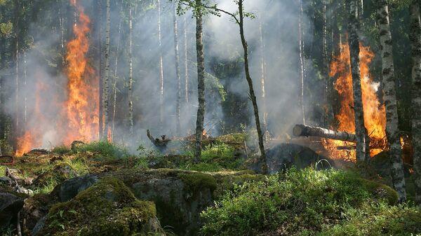 Лесной пожар - Sputnik Латвия