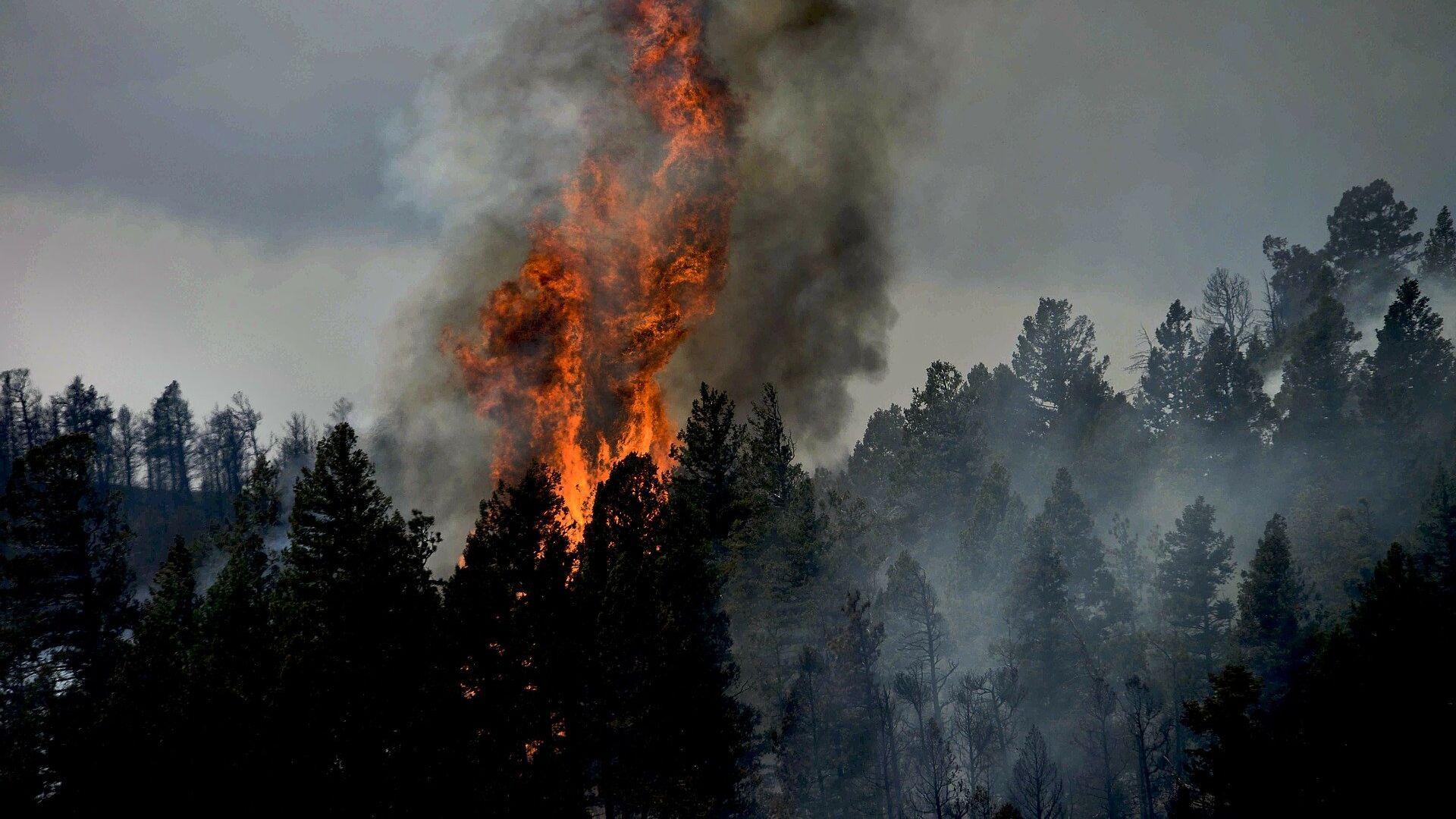 Лесной пожар - Sputnik Латвия, 1920, 17.07.2021
