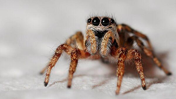 Zirnekļis - Sputnik Latvija