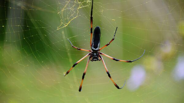 Zirneklis - Sputnik Latvija