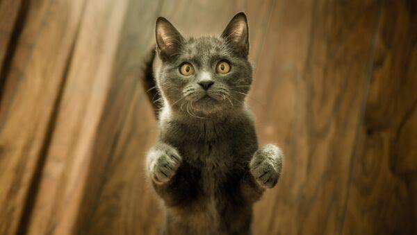 Кошка - Sputnik Латвия