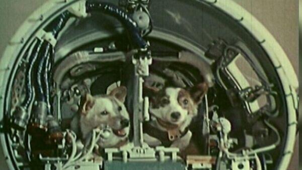 Белка и Стрелка совершили космический полет на корабле Спутник-5 19 августа 1960 года - Sputnik Latvija