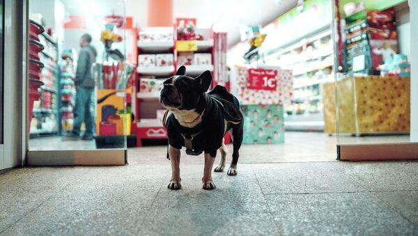 Собака у входа в магазин - Sputnik Latvija