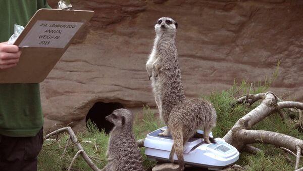 Взвешивание животных в лондонском зоопарке - Sputnik Латвия