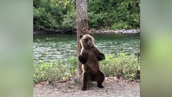 Американца удивил странный танец медведя в лесу - Sputnik Latvija