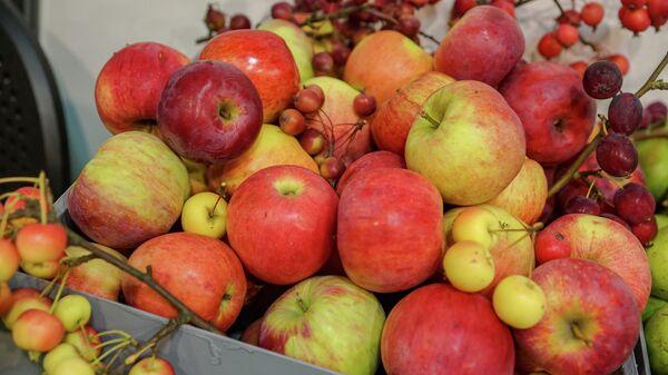 Латвийские яблоки - Sputnik Latvija