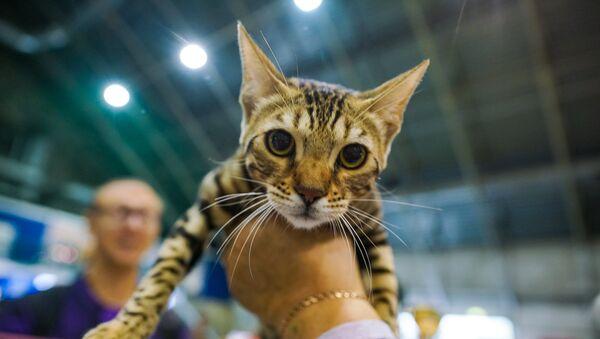 Выставка кошек в зале Сконто - Sputnik Латвия