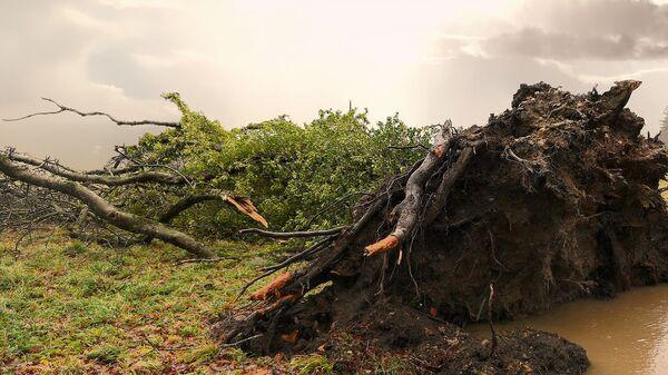 Поваленное дерево - Sputnik Latvija
