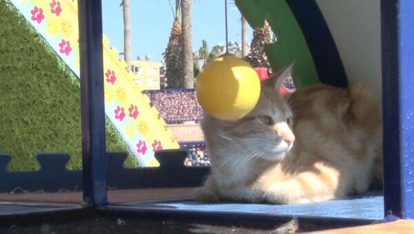 Мяу-парк для бездомных кошек в Турции - Sputnik Латвия