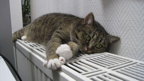 Кот на батарее - Sputnik Латвия